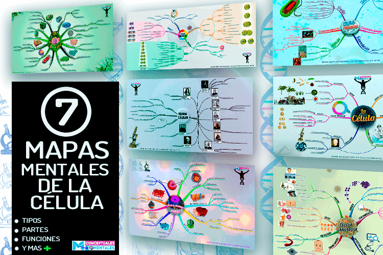 Mapas mentales de la célula, tipos, partes y funciones