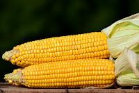 manfaat dan kandungan jagung manis untuk kesehatan