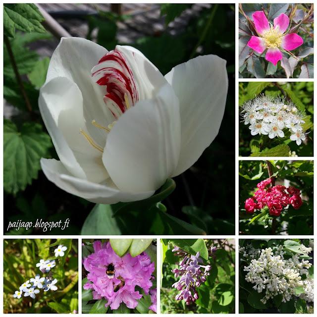 kesäkuun kukkakollaasi