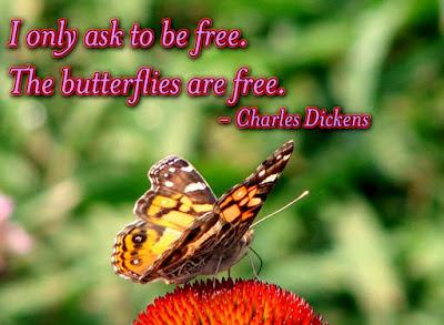 Best Butterflies Quotes