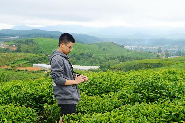 Đồi chè Cầu Đất, Lâm Đồng