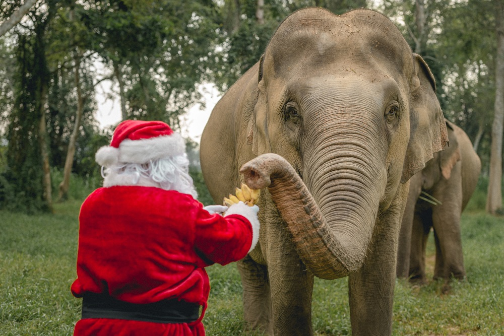 """LIVE """"ELEPHANT IN THE ZOOM"""" EXPERIENCE SUPPORTS CONSERVATION EFFORTS AT ANANTARA GOLDEN TRIANGLE ELEPHANT CAMP & RESORT"""