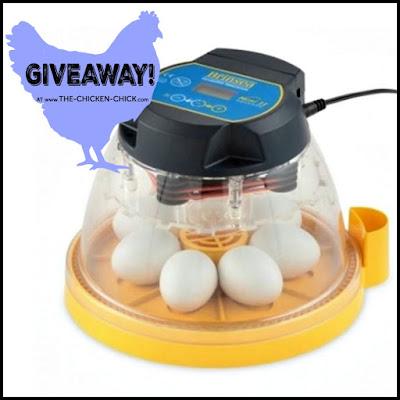 Brinsea Mini II Advance fully digital 7 egg incubator