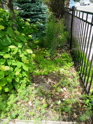 Front Garden Makeover Before in the Beach by Paul Jung Gardening Services--a Toronto Gardening Company