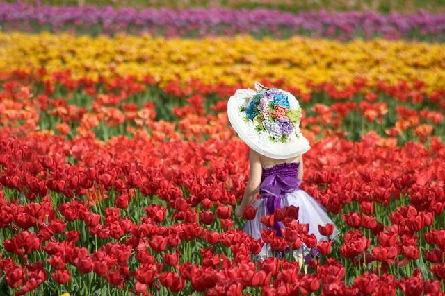 Ngắm nhìn mùa xuân đẹp như tranh vẽ ở nửa kia bán cầu
