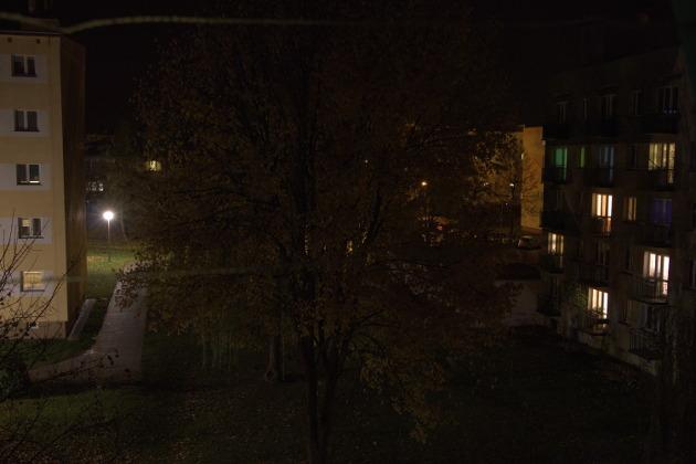 Zdjęcie drzewa w ciemności