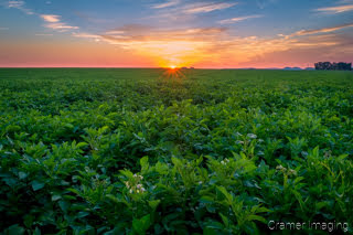 Cramer Imaging's fine art landscape photograph of the sun rising over a green and flowering potato field in Aberdeen, Idaho