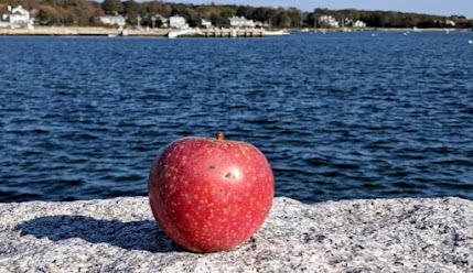 Red apple on granite slab with harbor in the background
