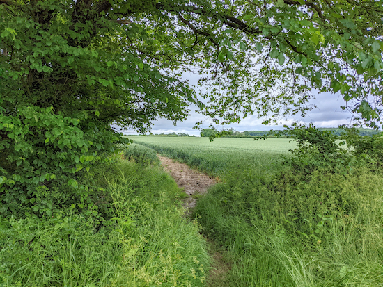 Hunsdon footpath 13 passing Thistly Wood - point 15