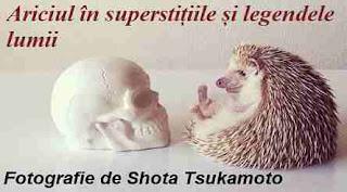 Superstitii si legende despre arici