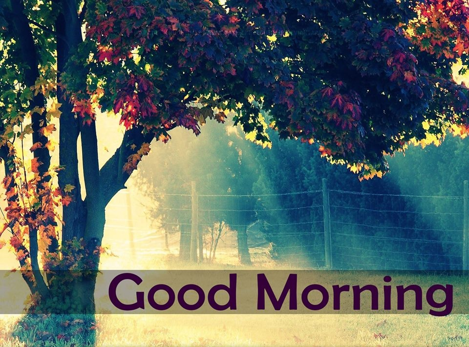 good morning wallpaper download latest images free download