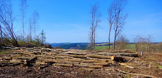 What is Deforestation, its causes, effects and strategies Ritusacademy RSS Feed RITUSACADEMY RSS FEED   RITUSACADEMY.COM EDUCATION EDUCRATSWEB