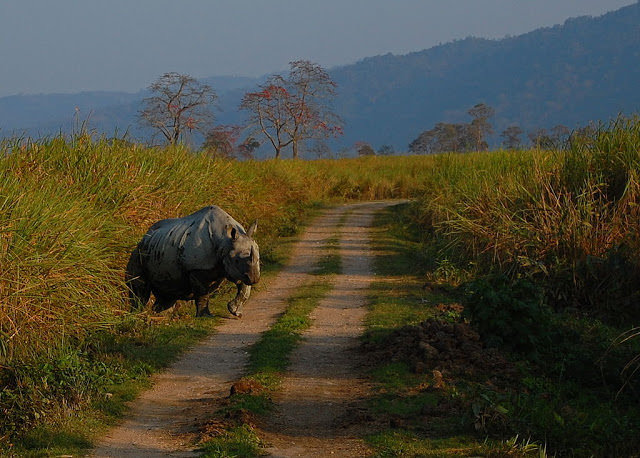UNESCO World Heritage Sites, India  - Kasiranga National Park