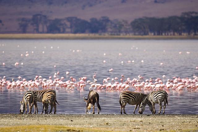 Lake Nakuru – Kenya