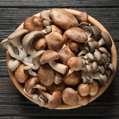 Mushroom Supplier Company in Jamshedpur