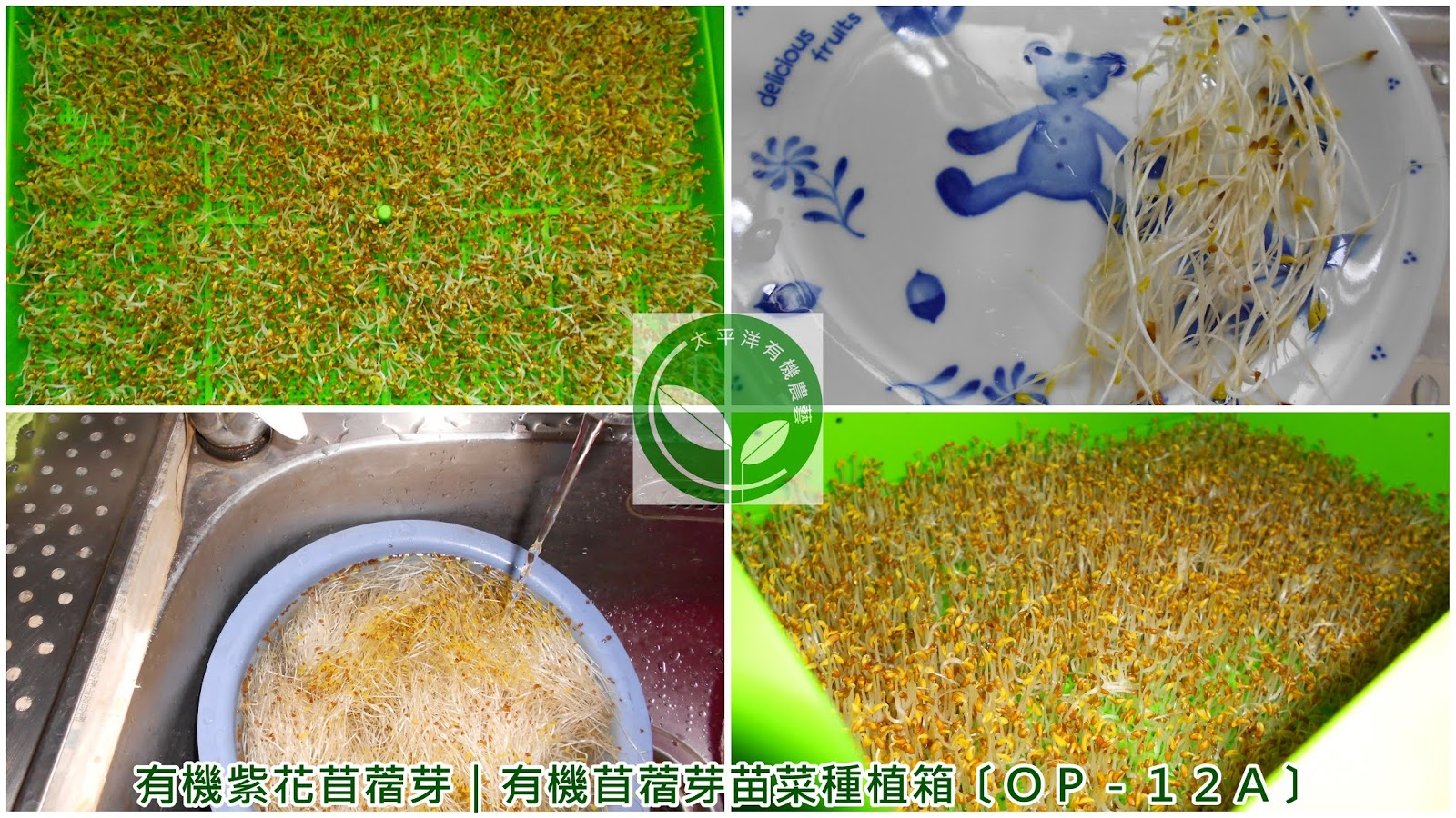 紫花苜蓿,紅花苜蓿,紫花苜蓿功效,苜蓿,苜蓿芽可以煮嗎,苜蓿芽捲,苜蓿芽保存,苜蓿芽寶特瓶,苜蓿草,苜蓿芽