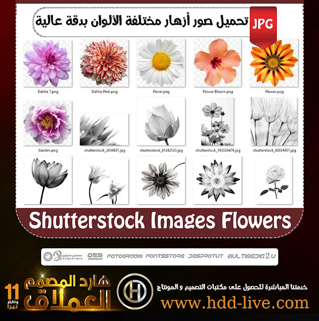 shutterstock image flower