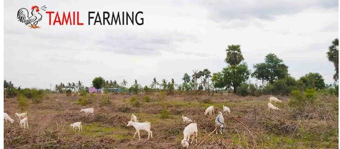 Goat Farming in Tamil Nadu | Aadu valarpu | ஆடு வளர்ப்பு