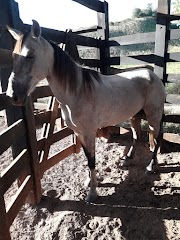 Cavalo roubado em Lago da Pedra foi visto em Trizidela do Vale na segunda-feira