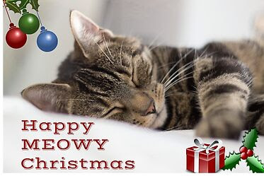 cat-themed Christmas card
