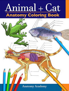 Animal & Cat Anatomy Coloring Book