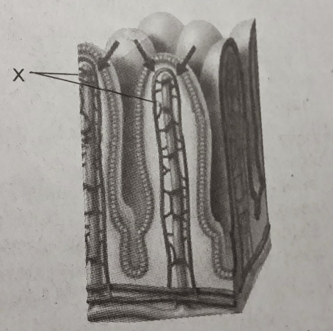 Bionomipa: Indikator 17 : Sistem Pencernaan