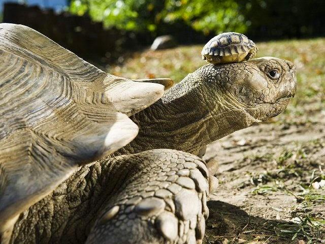 teknős előtt fogyás után)