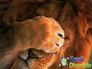 email divertido rir humor lol leão triste cansado scp Sporting