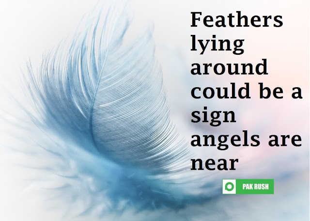 When angels are around you may find feathers lying at home