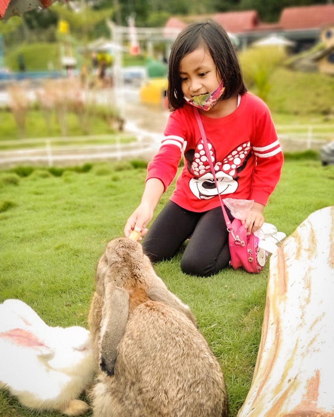 Pengalaman Menarik Main ke Wisata Akbar Zoo Banyuwangi