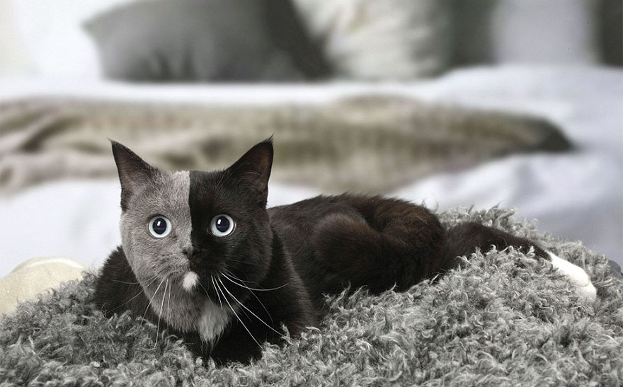 Kitten Born With An Extraordinary Face Grows Up To Be An Incredibly Adorable Cat