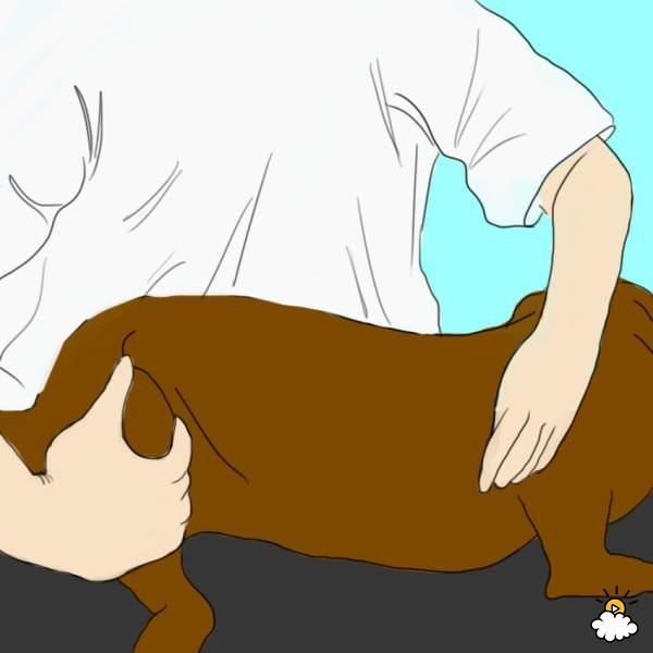 Σκύλος Πρώτες βοήθειες