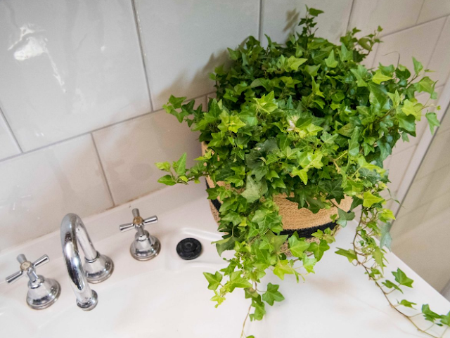 Put a beautiful plant on top of the sink.