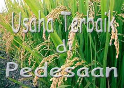 Usaha Di Pedesaan https://nungtung.blogspot.com/