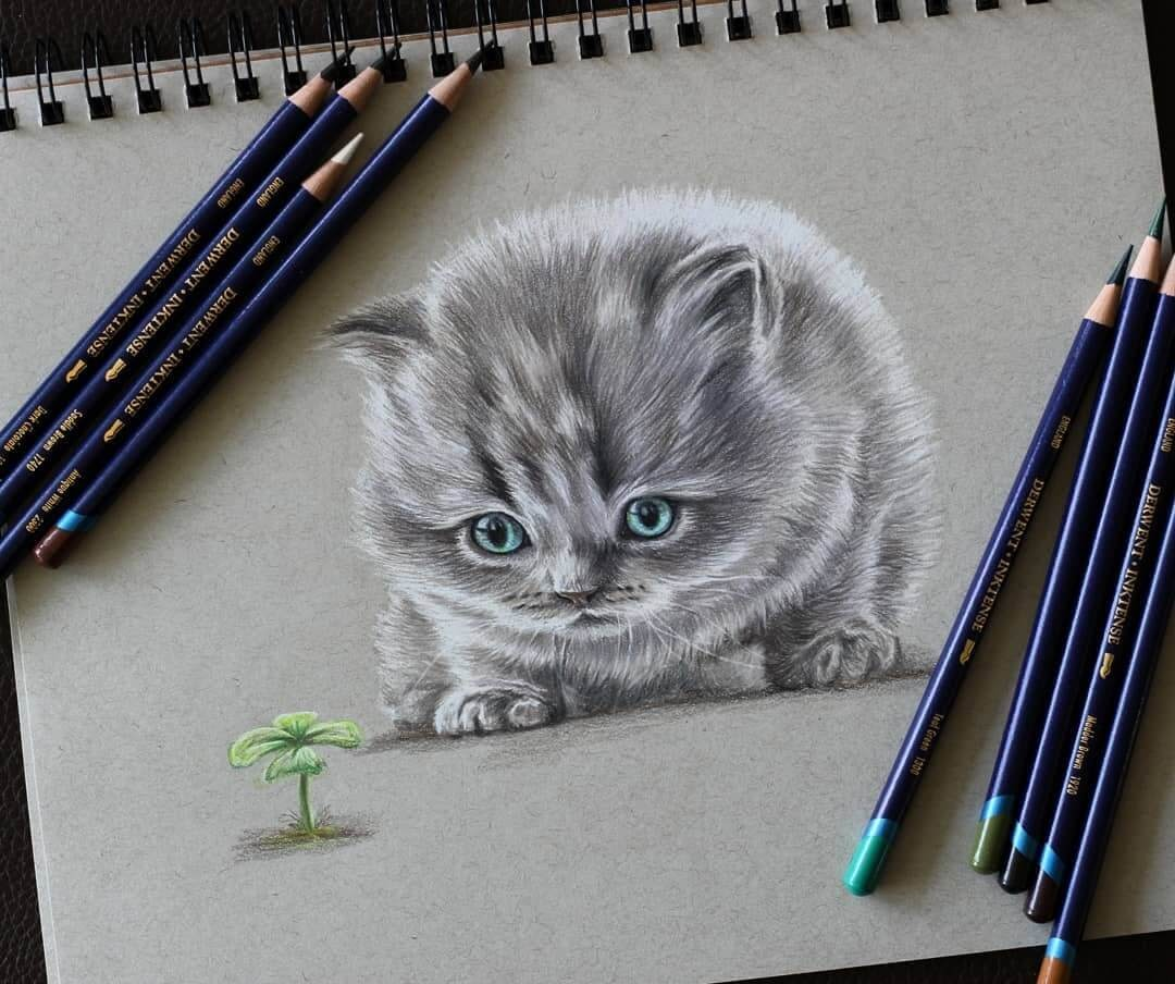 06-Kitten-with-Blue-Eyes-Jae-Kyung-Domestic-and-Wild-Animals-Pencil-Drawings-www-designstack-co