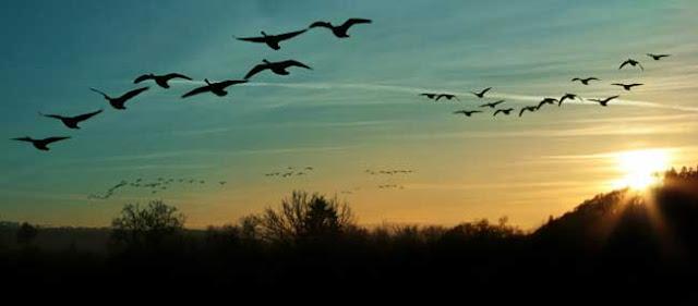 شبكية العين وخريطة التحليق عند الطيور المهاجرة
