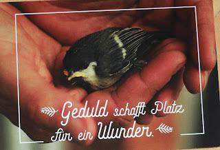 https://denspatzinderhand.blogspot.com/2017/06/platz-fur-ein-wunder.html