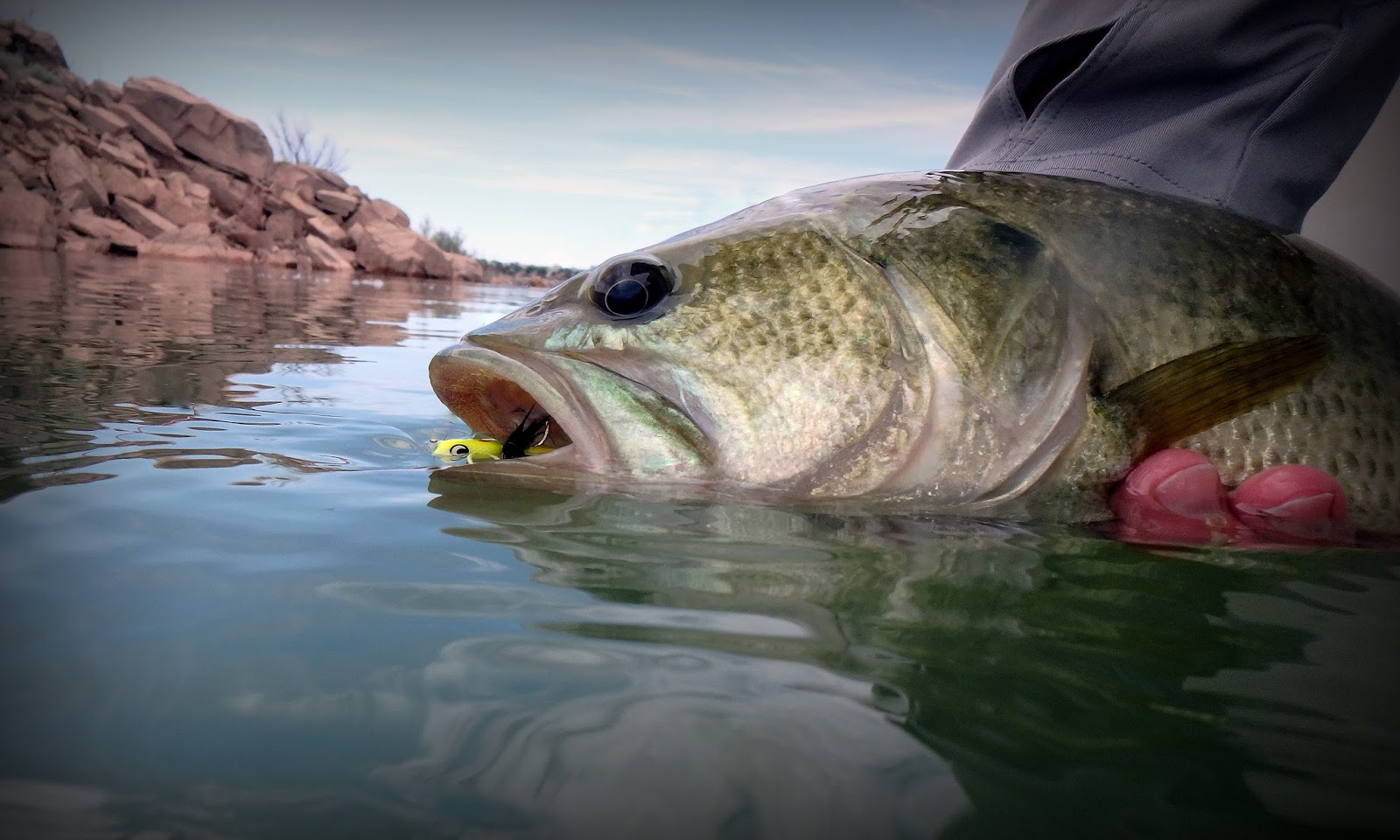 Gorge fly shop blog for Bass pro shop fly fishing