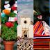 CULTURA - Portugal vai eleger as 7 Maravilhas da Cultura Popular