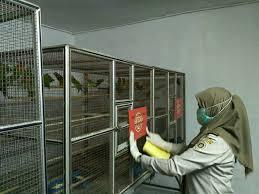 Belajar Dari Kasus Lovebird Impor Flu burung : Orang Indonesia Harus Belajar Mencintai Produk Dalam Negeri
