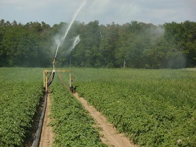 Νέες περιπέτειες για τους αγρότες με τις άδειες χρήσης νερού