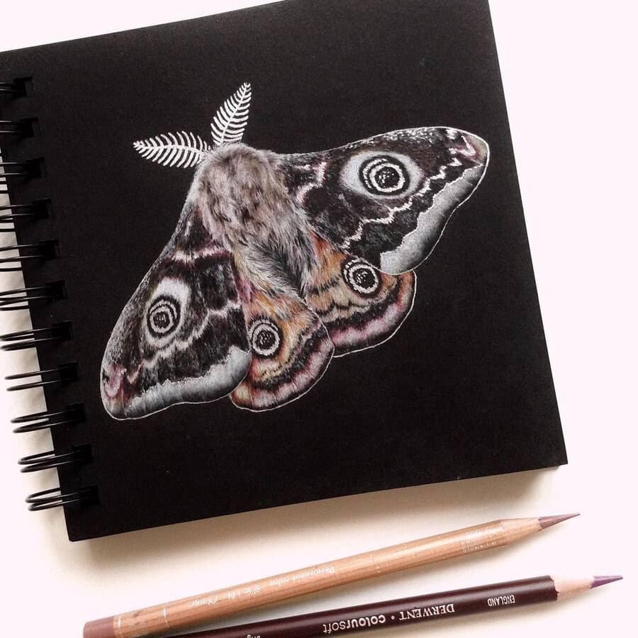 09-Moth-Ruzanna-www-designstack-co