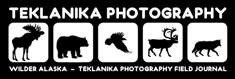 Teklanika Photography