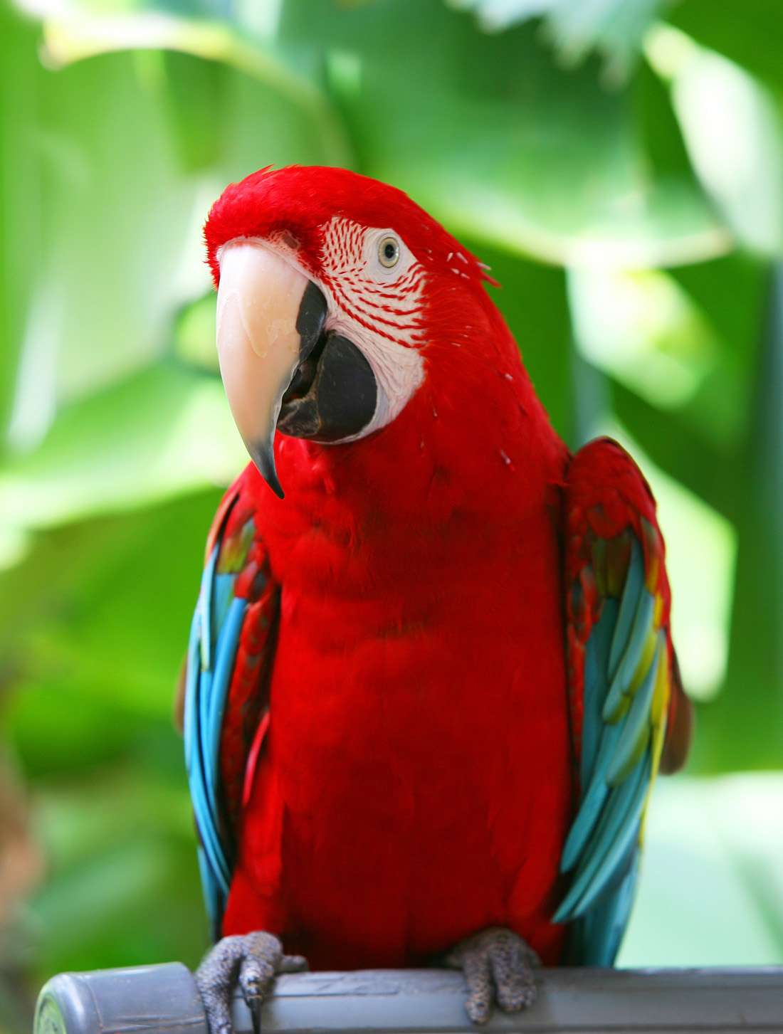 QQ Wallpapers: Parrot HD Wallpapers