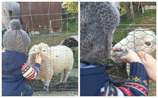 Kugelfisch-Blog: Jannes und das Schaf