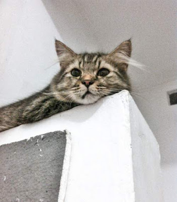 156 Nama Kucing Betina dan Jantan yang Bagus, Imut, Cantik, Lucu Untuk Kucing Kampung, Anggora, Persia