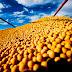 Seminário debate desafios para manter competitividade da soja brasileira