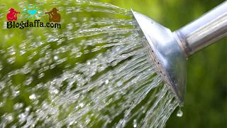 Cara menyuburkan tanah dengan menyiram air