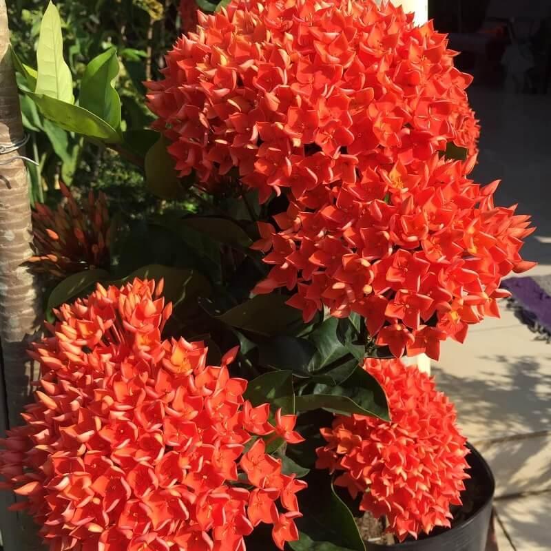 Các loại hoa tại Làng Hoa Sa Đéc 3
