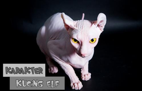 Karakter Kucing Elf
